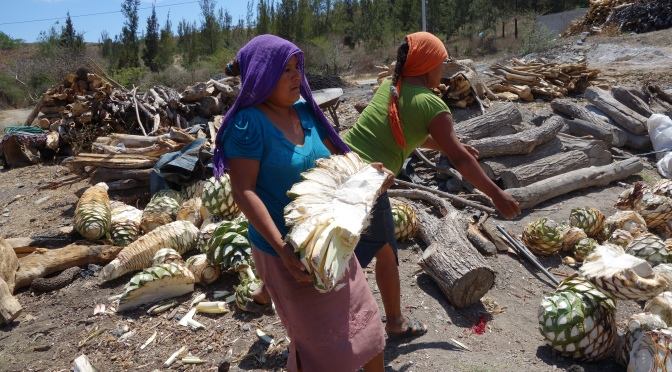 Women and Mezcal: Division of Labour between the Sexes