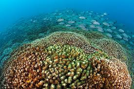 The Coral Reefs of Huatulco:   Unnatural Changes