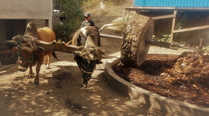 Resourcefulness and Ingenuity  in Clay Pot Mezcal Distillation