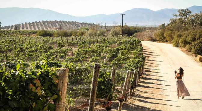 ¡Salud!  A Toast to The Vineyards of Mexico