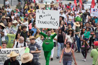 Mexico's Reckoning with NAFTA and GMO Corn