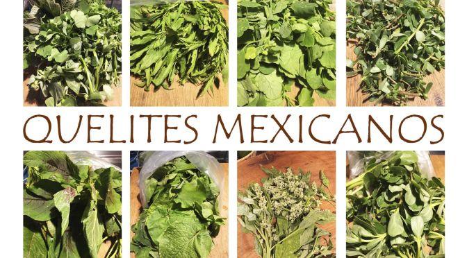 The Many Quelites de México